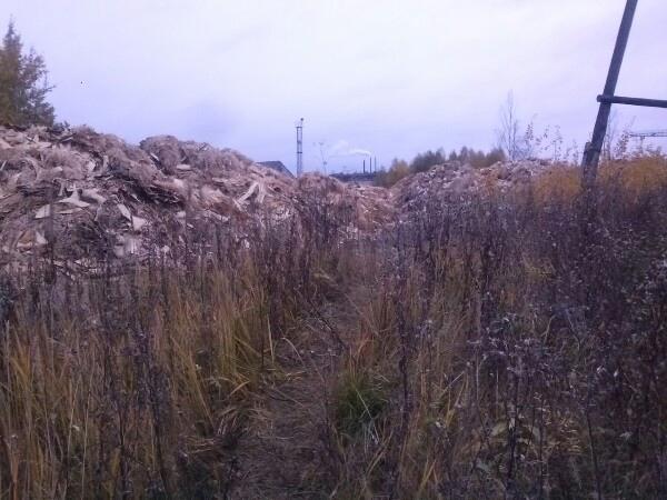 Фото Под Котельничем обнаружили новую свалку древесных отходов