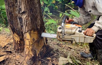 Фото В парке Эжвы спилили опасные деревья, на которые жаловались жители