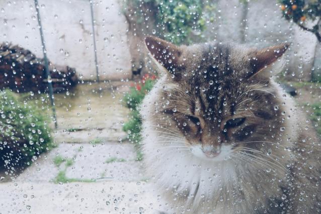 Фото На выходных в Кировской области ожидается дождь и до +13