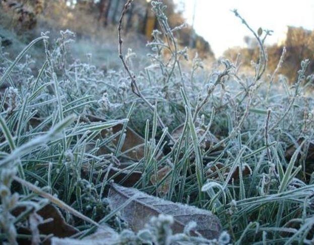 Фото В Кировской области в начале рабочей недели ожидаются заморозки
