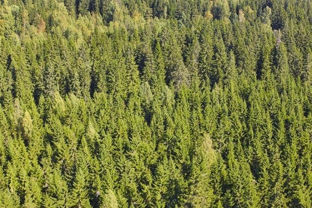 Фото С Днем работника лесопромышленной отрасли!