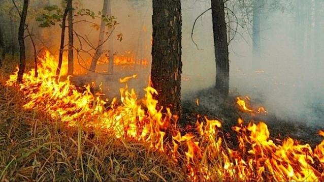 Фото На территории Кировской области обнаружено семь новых лесных пожаров