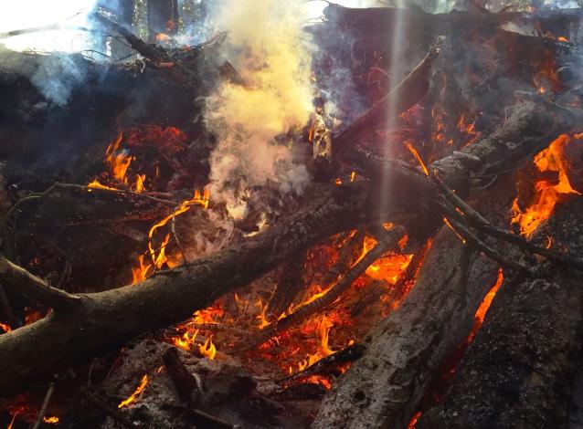 Фото В Фалёнском районе потушили лесной пожар площадью 20 га