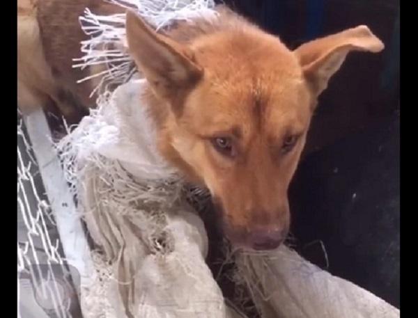 Фото Волонтеры обещают вознаграждение в 20 тыс. рублей за информацию о собаках с предприятия в Кирово-Чепецке