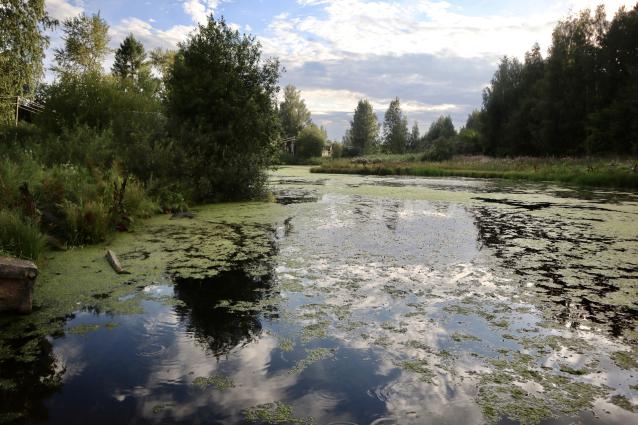 Фото Общественники обратились в прокуратуру с результатами проб воды из Мостовицы