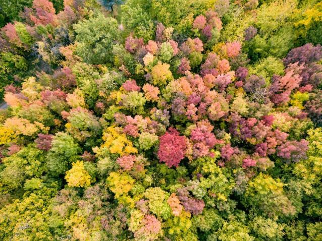 Фото В Шабалинском районе незаконно нарубили лес на 250 тыс. рублей