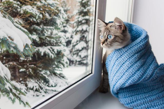 Фото В Кирове после праздничных выходных морозы перевалят за 40 градусов