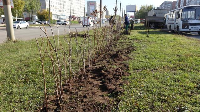 Фото В Кирове вдоль ул. Московской вместо заборов посадят кустарники