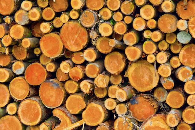 Фото В Кировской области колхоз незаконно нарубил лес на 980 тыс. рублей