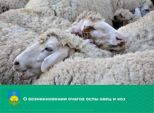 Фото В Коми скот стал болеть оспой