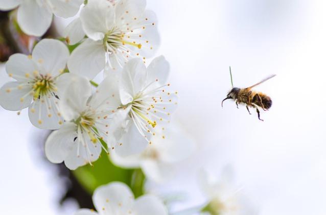 Фото В Кировской области пчёл убили пестицидом «Кунгфу Супер»