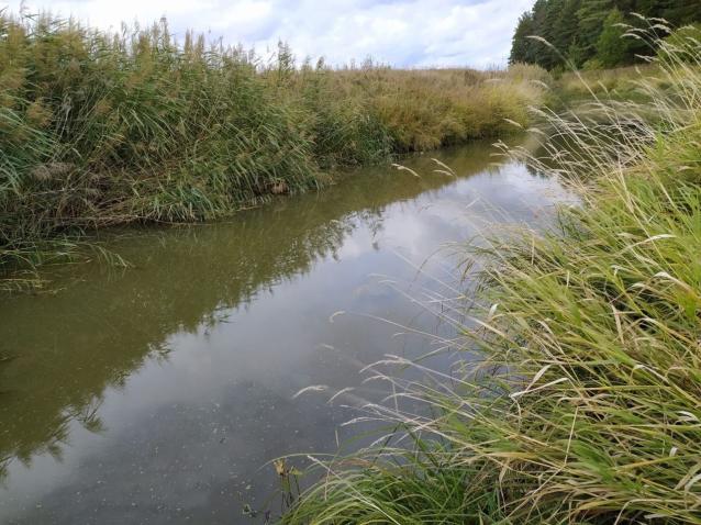 Фото В реке Чернянице в Котельниче концентрация нефтепродуктов превышена в 7,4 раза