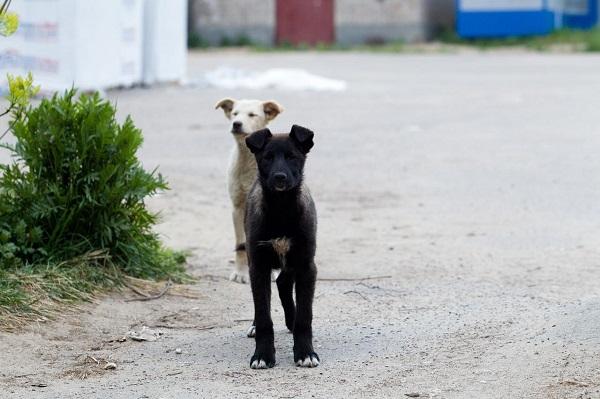 Фото На предприятии в Кирово-Чепецке собак держат для еды