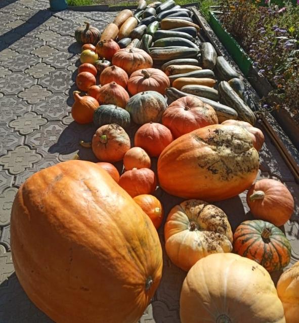 Фото В Кировской области вырастили тыкву весом 32 килограмма