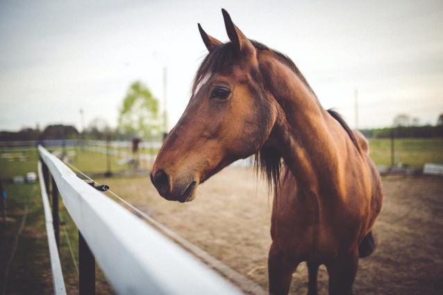 Фото В Сыктывдинском районе введен карантин из-за вспышки лептоспироза у лошадей