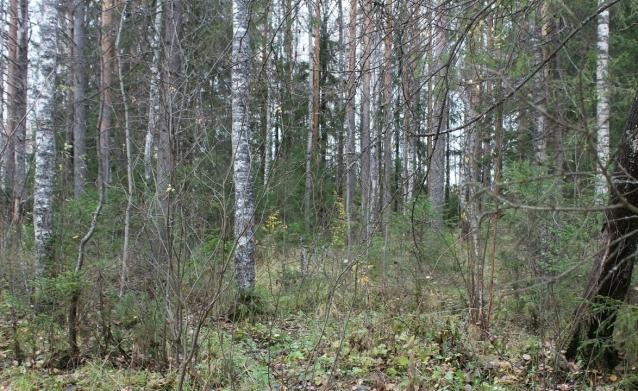 Фото В Троицко-Печорском районе мужчина до смерти избил сожительницу в лесу