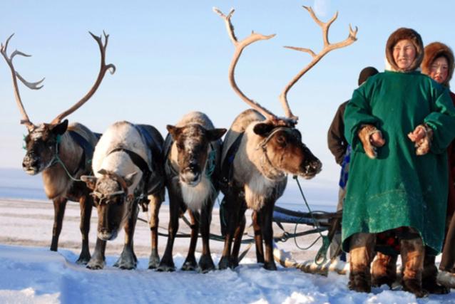 Фото В Коми на соцподдержку оленеводов выделили 5 млн рублей
