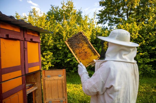 Фото Кировские пчеловоды обратились за помощью к Путину