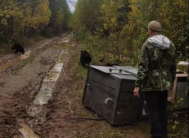 Фото В заказнике «Былина» в Опаринском районе выпустили на свободу трёх медвежат