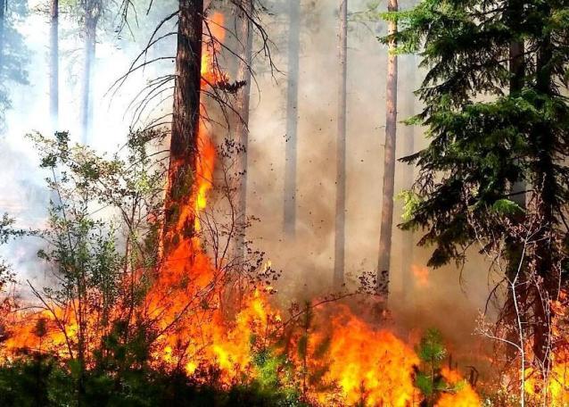 Фото В Советском районе на главу поселения завели дело за пожар с ущербом 6 млн рублей