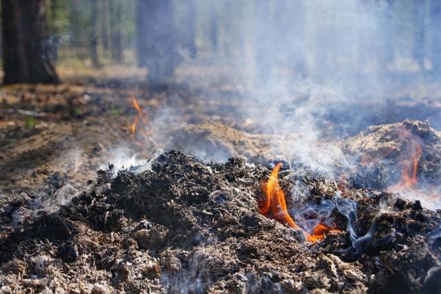Фото В Кировской области за пожароопасный сезон произошло 147 лесных пожаров