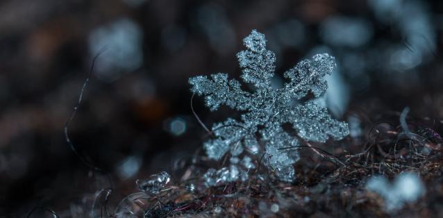 Фото На выходных в Коми ожидается снег