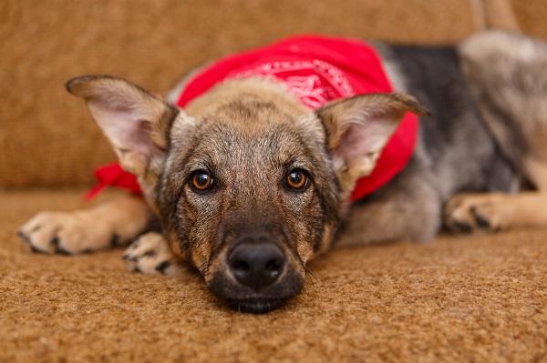 Фото В Кирове стартовала акция помощи бездомным собакам