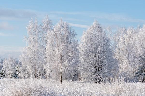 Фото В Кировской области ожидается умеренно холодная зима
