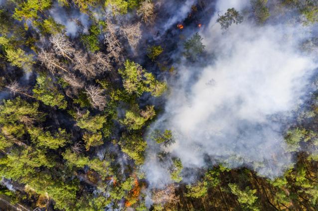 Фото С 7 по 11 июня в Кировской области объявили чрезвычайную пожарную опасность пятого класса